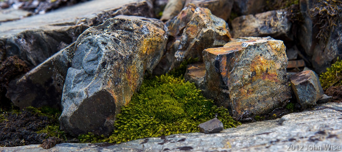 Greenery in a rock garden near an overlook of the river and mountains in the distance. Alsek River in the Yukon, Canada