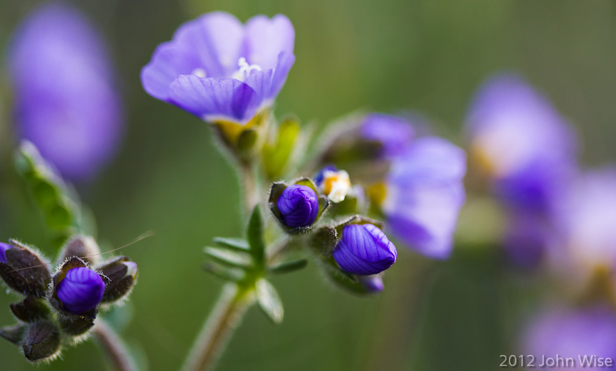 Purple wildflowers that Caroline will look up shortly and share with readers what they are